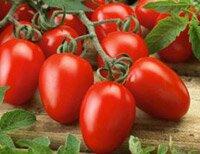 лучшие сорта помидоров для теплицы