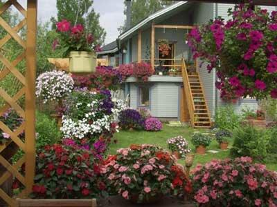 Сад с петуниями