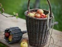 приспособление для съема яблок с дерева