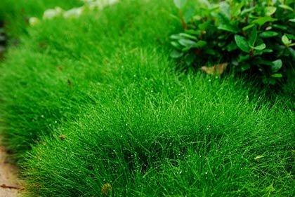 Кавказские травы - все лечебные и целебные от долгожителя