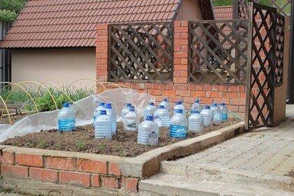 выращивание огурцов в бутылках